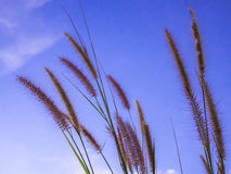 Mission grass and the blue sky Royalty Free Stock Images