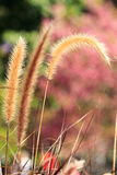 Mission grass. With pink background Royalty Free Stock Photography