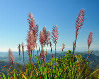 Mission grass under sunlight Stock Photography