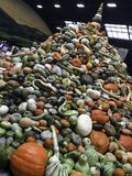 A stacked pile of squash and pumpkins at the 2017 National Heirloom Expo in Santa Rosa, CA royalty free stock images