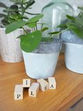 Missionary plant or pilea peperomioides on a wooden table with l royalty free stock image
