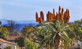 Missione gigante Santa Barbaa California di Barberae dell'aloe dell'albero Fotografie Stock
