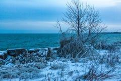Mississauga, Kanada, Luty 14, 2019: zimy idylla zamarznięci drzewa i brzeg Jeziorny Ontario blisko Toronto, Kanada zdjęcia stock