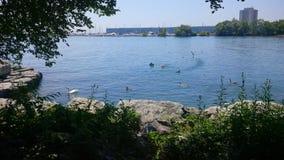 Mississauga nabrzeże zdjęcia stock