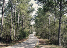 Mississippi delstatspark Arkivfoton