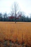 Mississippi fält Arkivfoto