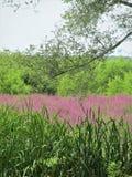 Mississippi Marsh Flowers lizenzfreies stockbild