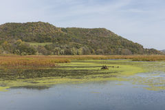 Mississippi River Backwaters. Swampy backwaters of the Mississippi River during early autumn Royalty Free Stock Photo