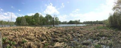 Mississippi Swamp Royalty Free Stock Photo