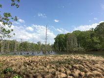 Mississippi träsk arkivbilder