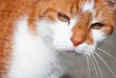 Misslynt katt Arkivfoton