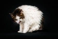 Missmutiger Blick der kläglichen nassen Katze mit hellen gelben Augen Lizenzfreies Stockbild