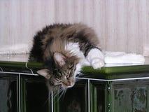 Missnöjd katt Arkivfoto