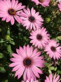 Missouri botanisk trädgård arkivfoton