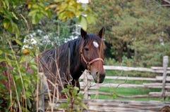 misstänksam hästfjärdedel Royaltyfri Foto