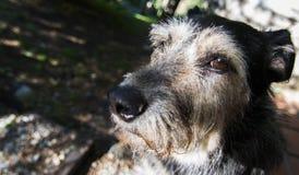 Misstänksam hund i gatan Fotografering för Bildbyråer