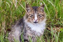 Misstänksam katt i gräset Arkivbild