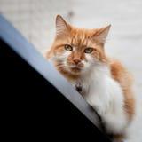 Misstänksam katt på räcket Royaltyfri Fotografi