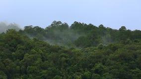 Mist över berget för överkant för regnskogträd stock video