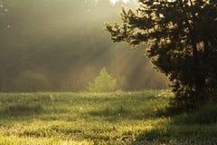 Mist. The mist through the sunbeams Royalty Free Stock Image