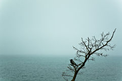 Mist. And crow on Black sea Stock Photo