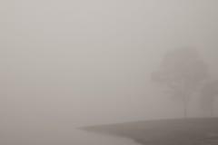 Mist Stock Images