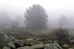 Mist arkivfoton