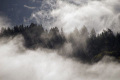 Mist above the forest. Misty clouds above Mendocino forest, from small plane Stock Image