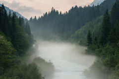 Mist above river and forest Royalty Free Stock Image