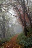 Mist in Alpien bos Stock Afbeelding