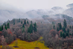 Mist around forest. Thick mist in a mountain panorama Stock Photography
