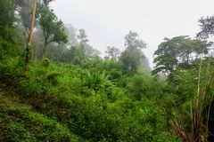 Mist in the Asian rain forest Royalty Free Stock Image