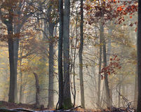 Mist in automn Royalty Free Stock Photo