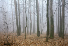 Mist autumn forest Royalty Free Stock Photography