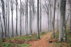 Mist in the autumn forest Royalty Free Stock Photo