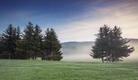 Mist behandelde bomen in de vallei Stock Foto