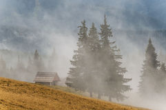 Mist in bergbos Royalty-vrije Stock Afbeelding