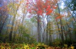 Mist in bergen Allegheny stock fotografie