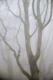 Mist in bos Stock Foto