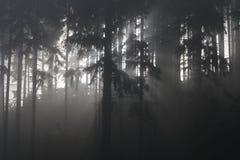 Mist in bos royalty-vrije stock foto's