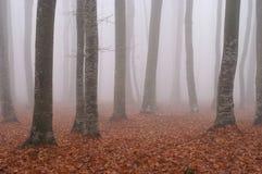 Mist in bos 4 Royalty-vrije Stock Afbeeldingen
