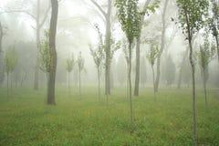 Mist in bos Royalty-vrije Stock Foto