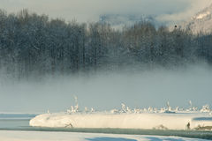 The Mist Chilkat Valley under a covering of snow Stock Photography