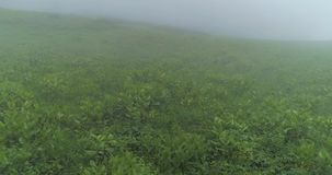 Mist and clouds in the country. Misty woods, flying through the clouds.Aerial of beautiful forest trees and green meadows covered with clouds or mist. Landscape stock video