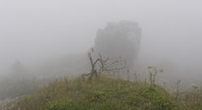 Mist covers the mountain and plants Stock Photography
