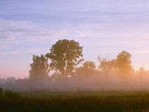 Mist at dawn in the village. Houses and trees in the russian village at down Royalty Free Stock Image