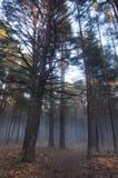 Mist in de bosvloer Royalty-vrije Stock Afbeeldingen