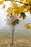 Mist in de herfstseizoen Royalty-vrije Stock Foto