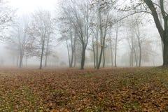 Mist in de herfstseizoen Royalty-vrije Stock Afbeelding