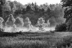 Mist in de Weide Stock Fotografie